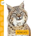 Bobcats (Spot Wild Cats) Cover Image
