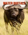Water Buffalo: Amazing Facts about Water Buffalo Cover Image