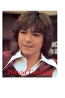 David Cassidy: The Last Kiss Cover Image