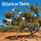 Goats in Trees 2022 Square Cover Image