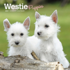 West Highland White Terrier Puppies 2021 Mini 7x7 Cover Image