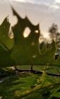 Leafy Morning Sketchbook (Natural Wonders #27) Cover Image