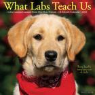 What Labs Teach Us 2021 Wall Calendar (Dog Breed Calendar) Cover Image