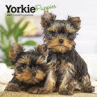 Yorkshire Terrier Puppies 2021 Mini 7x7 Cover Image