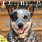 Just Blue Heelers 2021 Wall Calendar (Dog Breed Calendar) Cover Image
