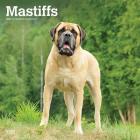 Mastiffs 2021 Square Cover Image