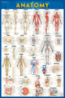 Anatomy Poster (24 X 36) - Laminated: A Quickstudy Reference Cover Image