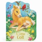 A Little Colt Cover Image