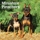 Miniature Pinschers 2021 Square Cover Image