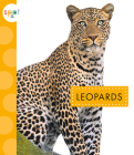 Leopards (Spot Wild Cats) Cover Image