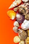 Seashells on Orange Journal: 150 Page Lined Notebook/Diary Cover Image