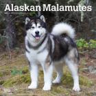 Alaskan Malamutes 2021 Square Cover Image