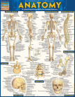 Anatomy - Reference Guide (8.5 X 11): A Quickstudy Reference Tool Cover Image