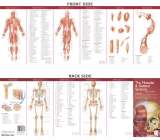 Anatomical Chart Company's Illustrated Pocket Anatomy: The Muscular & Skeletal Systems Study Guide Cover Image