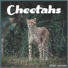 Cheetahs 2022 Calendar: Official Cheetah Animal 2022 Calendar 16 Months Cover Image
