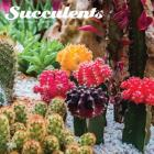 Succulents 2020 Square Cover Image