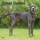 Great Danes International Edition 2020 Square Btuk Cover Image