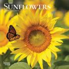 Sunflowers 2020 Mini 7x7 Cover Image