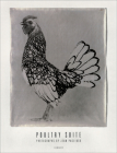 Poultry Suite: Photographs by Jean Pagliuso Cover Image