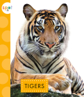 Tigers (Spot Wild Cats) Cover Image