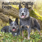 Australian Cattle Dogs 2021 Square Cover Image