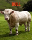 Bull: Learn About Bull and Enjoy Colorful Pictures Cover Image