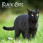 Black Cats 2021 Square Foil Cover Image