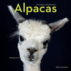 Alpacas Wall Calendar 2021 Cover Image