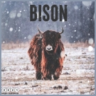 Bison 2021 Wall Calendar: Official Bisons 2021 Calendar 18 Month Cover Image