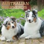 Australian Shepherds 2021 Square Foil Cover Image