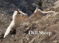 Dall Sheep Cover Image