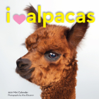 I Heart Alpacas Mini Wall Calendar 2021 Cover Image