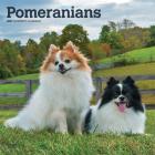 Pomeranians 2021 Square Cover Image