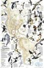 National Geographic: Bird Migration, Western Hemisphere Wall Map (20.25 X 31.25 Inches) (National Geographic Reference Map) Cover Image