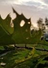 Leafy Morning Sketch Journal (Natural Wonders #31) Cover Image