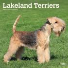 Lakeland Terriers 2020 Square Btuk Cover Image