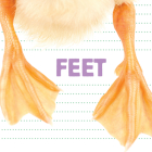 Feet (Whose Is It?) Cover Image