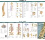 Anatomical Chart Company's Illustrated Pocket Anatomy: The Vertebral Column & Spine Disorders Study Guide Cover Image