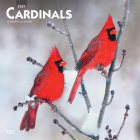 Cardinals 2021 Square Cover Image