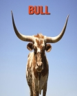 Bull: Fun Learning Facts About Bull Cover Image