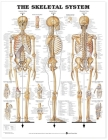 The Skeletal System Anatomical Chart Cover Image