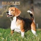 Beagles 2021 Square Foil Cover Image