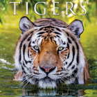 Tigers 2022 Wall Calendar Cover Image