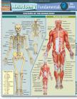 Anatomy Fundamentals: Life Science (Quickstudy: Academic) Cover Image