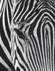 Zebra Notebook Large Size 8.5 x 11 Ruled 150 Pages Cover Image