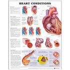 Heart Conditions Cover Image