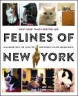 Felines of New York: A Glimpse Into the Lives of New York's Feline Inhabitants Cover Image