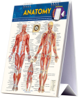 Anatomy Easel Book: A Quickstudy Reference Tool Cover Image