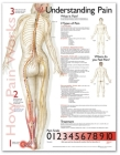 Understanding Pain Anatomical Chart Cover Image