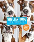 Shelter Dogs in a Photo Booth Cover Image